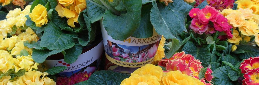 Markdorf verschenkt Blumen